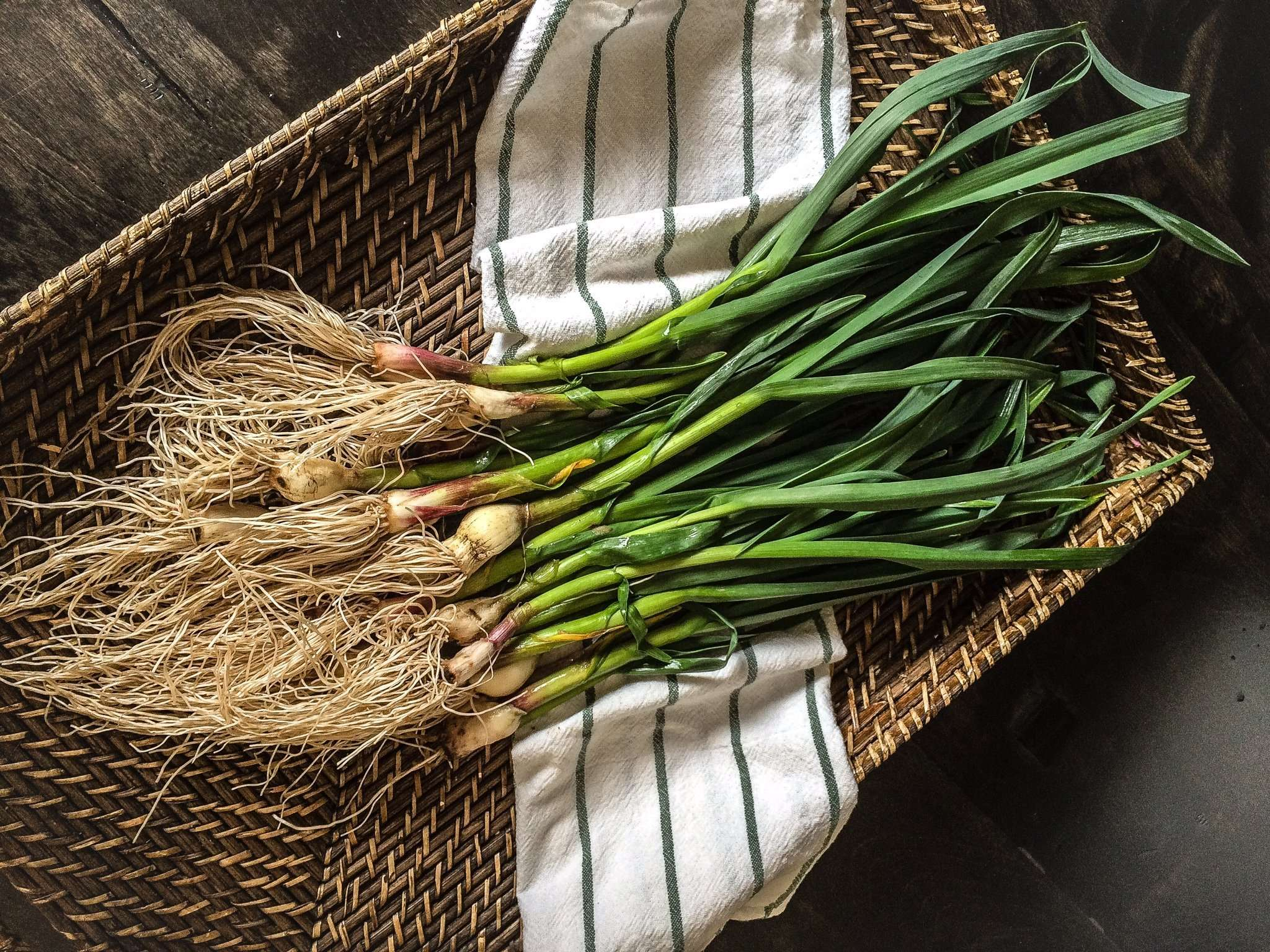 Farm to Table: Green Garlic